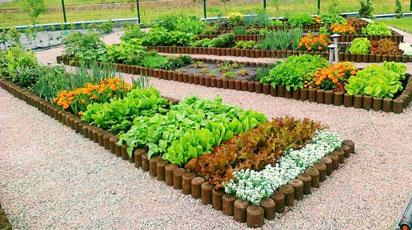 Мини-огород: маленькая площадь – большие возможности
