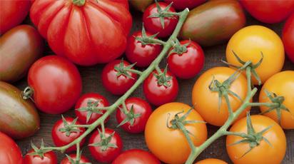 Секреты высоких урожаев помидоров и лучше сорта