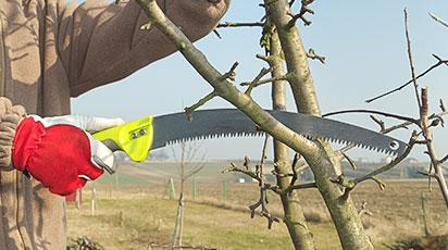 Весенняя обрезка деревьев и кустарников – как не навредить растениям