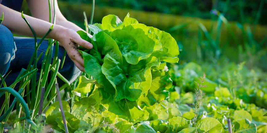 Июнь на даче — работы в саду, в огороде и  цветнике