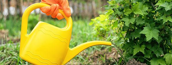 Как быстро подкормить деревья и кустарники – лайфхаки для здорового сада