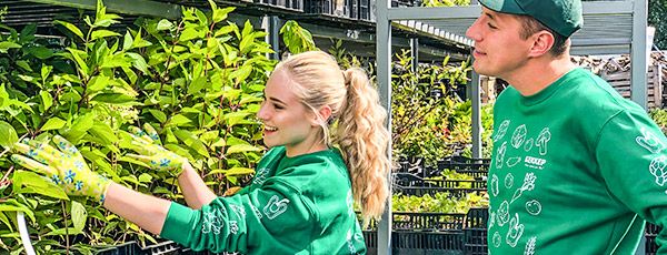 Как сохранить саженцы до посадки весной – советы опытных садоводов