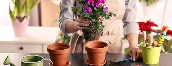 Перевалка растений и ее преимущества перед пересадкой