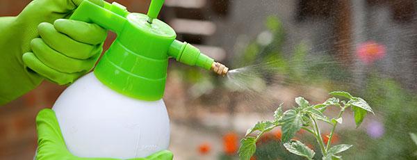 Суперэффективные способы борьбы с тлей на садовом участке
