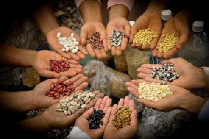 Как правильно сажать семена. Часть 1. Выбор.