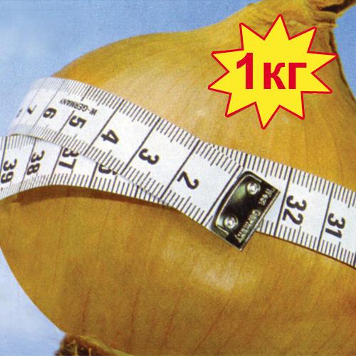 Лук Глобо репчатый, семена изображение 1 артикул 30.2212