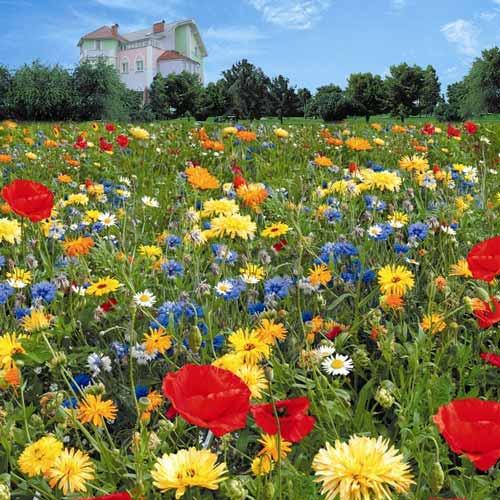 Газон цветущий Инстант Гарден, смесь окрасок изображение 1 артикул 69866