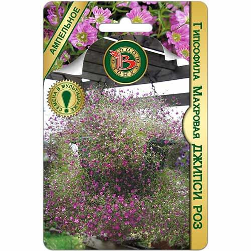 Гипсофила махровая Джипси Роз изображение 1 артикул 74826