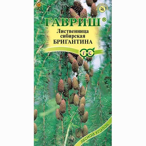 лиственница сибирская бригантина выращивание из семян