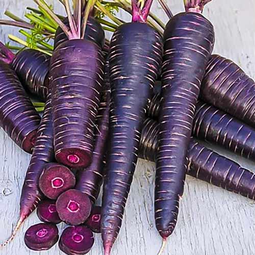 Морковь Майами шоколадная F1 изображение 1 артикул 71622
