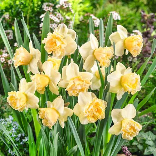 Нарцисс крупноцветковый Арт Дизайн изображение 1 артикул 67410