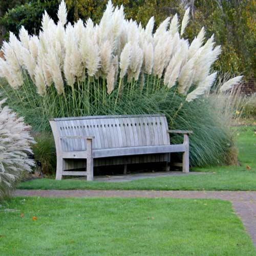 Пампасная трава Белый шлейф изображение 2 артикул 65853
