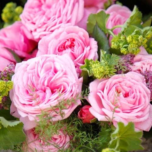 Роза флорибунда Саммер Романс