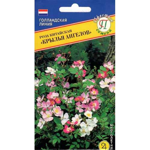 Роза китайская Крылья Ангелов изображение 1 артикул 71579