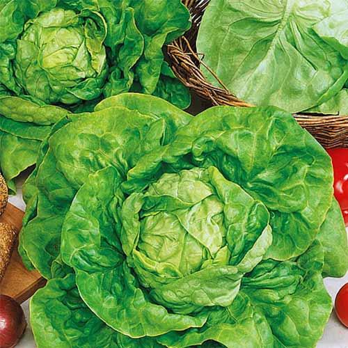 Салат кочанный Русский деликатес изображение 1 артикул 74233