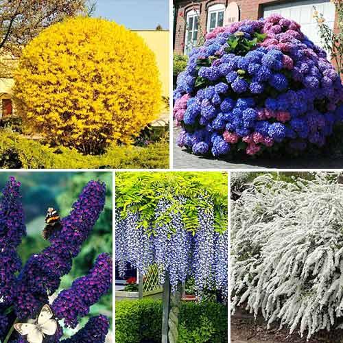 Суперпредложение! Комплект Многолетний сад из 5 саженцев изображение 1 артикул 9190