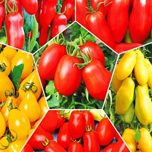 перцевидные помидоры сорта