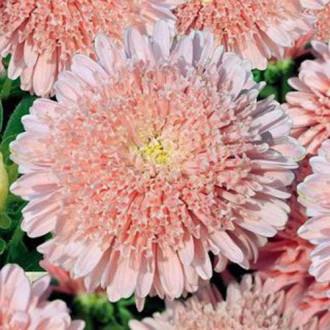 Астра Букет персиковый изображение 3