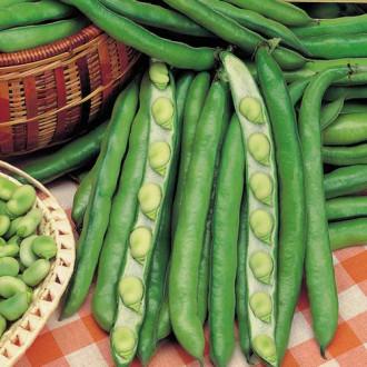 Фасоль овощная Романа изображение 2