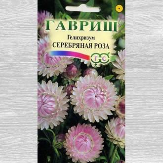 Гелихризум Серебряная роза изображение 3
