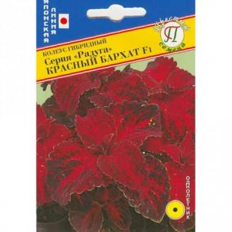 Колеус Радуга Красный бархат F1 изображение 2