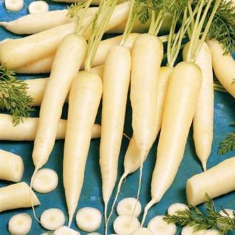 Морковь Карамель сахарная изображение 8