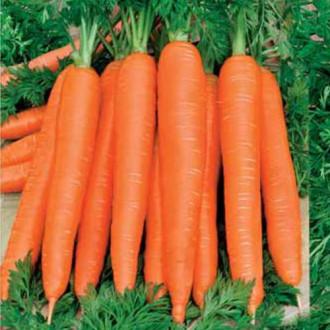 Морковь Осенний король изображение 3