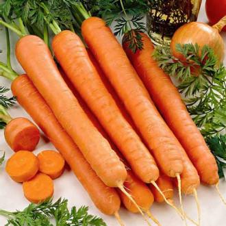 Морковь Русский гигант