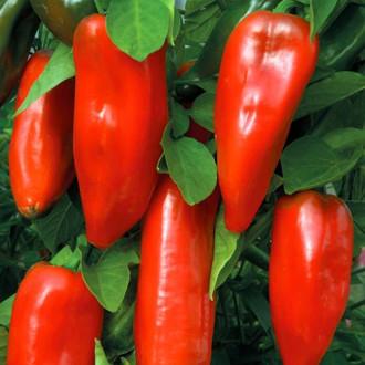 Перец сладкий Бизон красный изображение 8