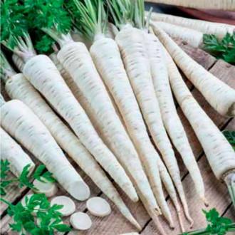 Петрушка корневая Урожайная изображение 3