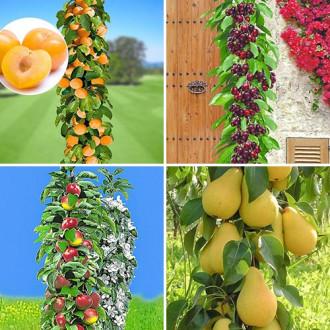 Суперпредложение! Комплект колоновидных деревьев Покорение Сибири из 4 саженцев изображение 7