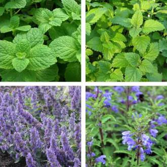 Травы для чая Бодрящее утро, смесь семян изображение 1