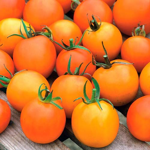 Томат Жемчужина оранжевая изображение 1 артикул 71690