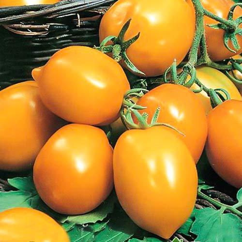 Томат Непас 5 (Непасынкующийся оранжевый с носиком) изображение 1 артикул 66694