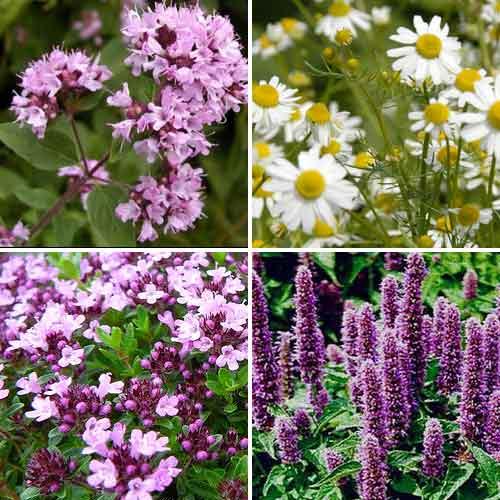 Травы для чая Ароматы лета, смесь семян изображение 1 артикул 65933