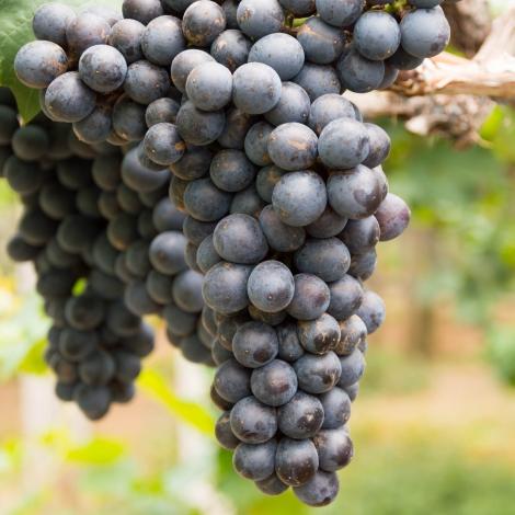 Виноград кишмиш черный изображение 1 артикул 7317