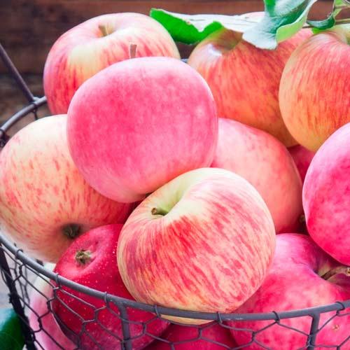 Яблоня Налив розовый изображение 1 артикул 7470