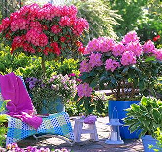 Декоративные кустарники