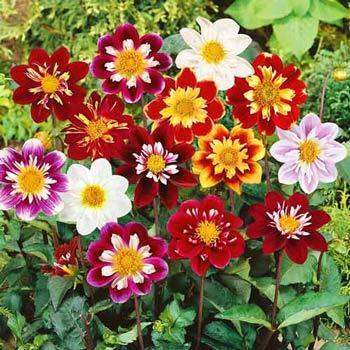 Семена цветов Профессиональная серия