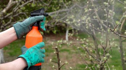 Когда надо обрабатывать деревья от вредителей — Строительный портал №1