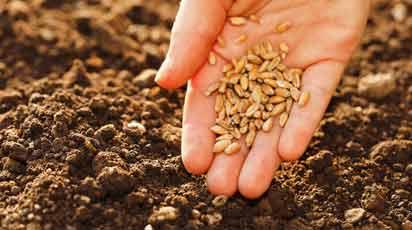 Химическая обработка семян