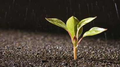 Растения растущие на влажных почвах
