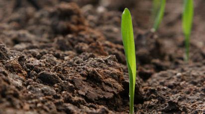 Какие растения хорошо растут на кислых почвах