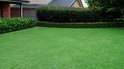 Как сеять газонную траву правильно — пошаговая инструкция с фото и видео