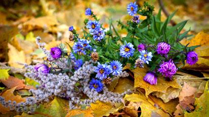 Цветы сентября на дачных участках. Подборка статей и видео на сайте 7 дач