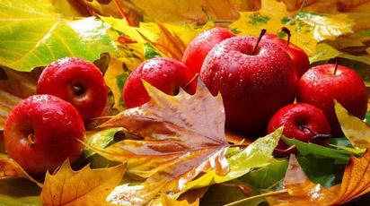 Саженцы яблони уход осенью укрытие на зиму