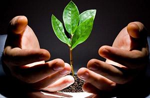 Освещение семян и рассаді