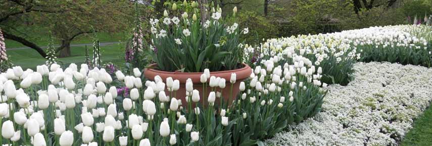 Белые цветы виды
