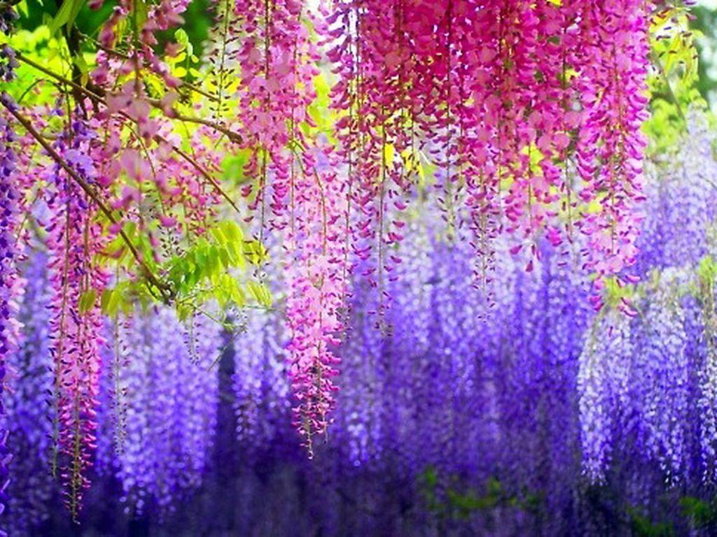 Душистые растения 6