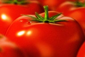 битва томатов 2